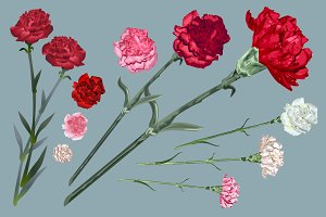 Set carnation flowers