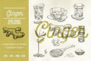 Hand drawn ginger illustrations