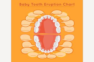 Baby Tooth Eruption Chart