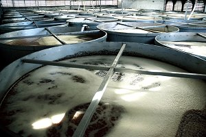 Tequila ferment process in Jalisco