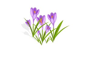 Purple crocuses in the snow vector.