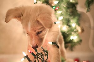 Puppy Christmas lights