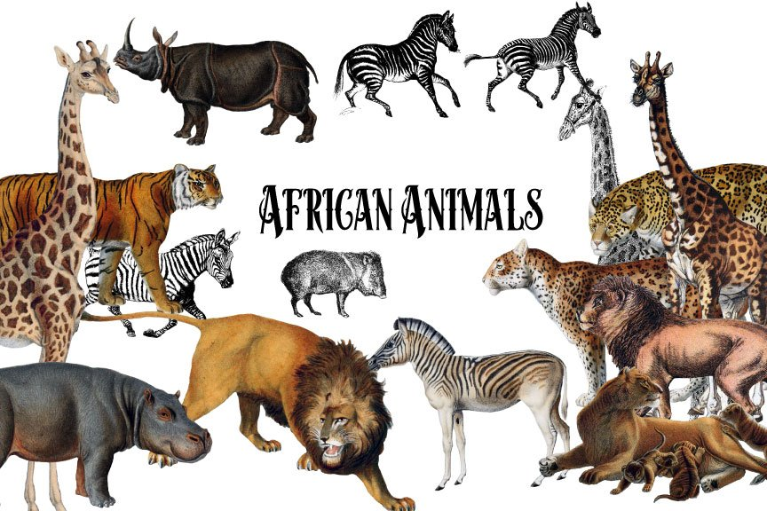 vintage african animals illustrations creative market