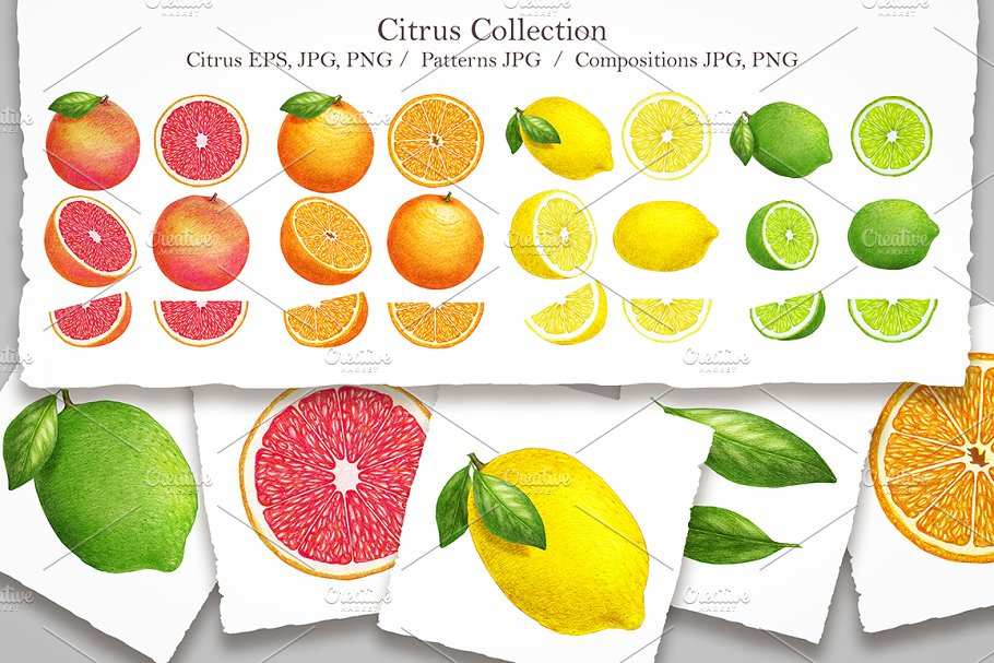 Citrus Collection in Illustrations - product preview 8