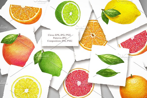 Citrus Collection in Illustrations - product preview 1