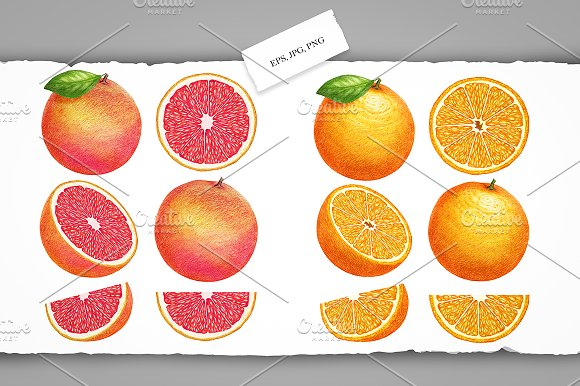 Citrus Collection in Illustrations - product preview 2