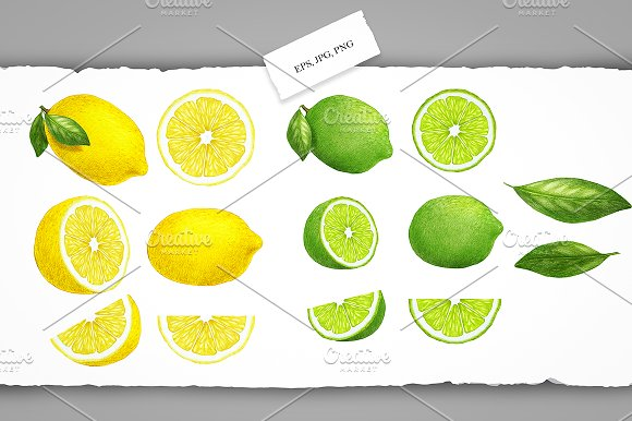 Citrus Collection in Illustrations - product preview 3