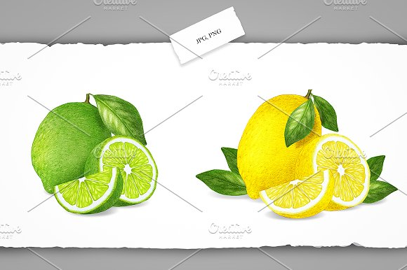 Citrus Collection in Illustrations - product preview 4