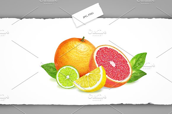 Citrus Collection in Illustrations - product preview 6