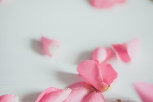 Pink Flower Petals Stock Photo