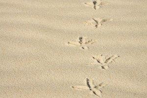 sand of a bird