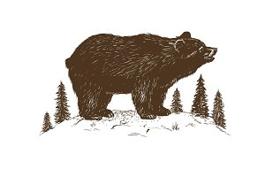 Brown bear symbol vector illustration