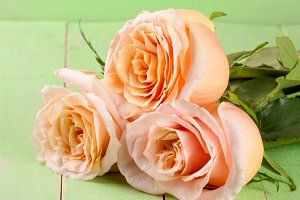 three fresh beige roses on a green wooden background