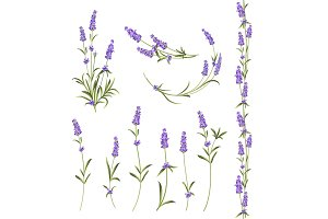 Set of lavender flowers.