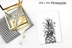 Pineapple. Hand drawn vector