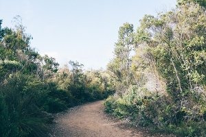 bush walk ii