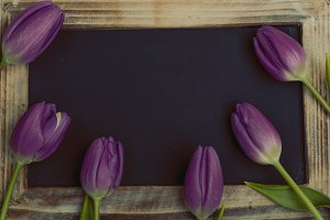 Beautiful purple tulips with blackboard