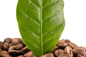 Photo of coffee beans and leaf