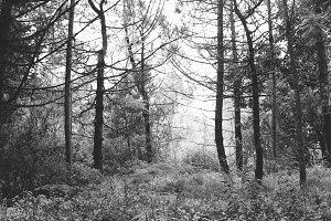 FOREST BNW