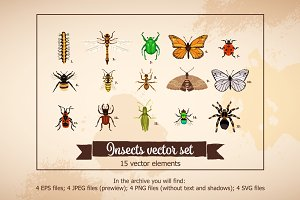 Insects Vector Set