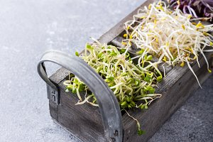 Assorted vegetable sprouts