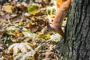Squirrel on a tree in the Park
