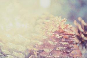 Glittering pinecone