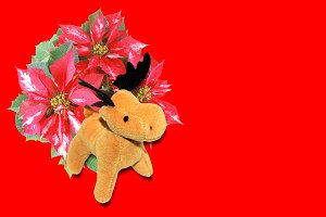 Poinsettia Christmas Star with deer moose