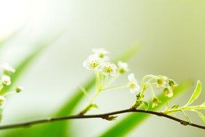 Macro Flower, Soft, Beauty Nature