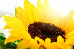 Closeup of Beautiful Flower, macro