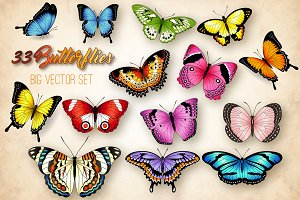 Vector Butterflies Illustrations