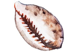 Watercolor seashell isolated vector