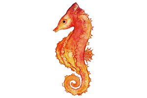 Watercolor seahorse clip art vector