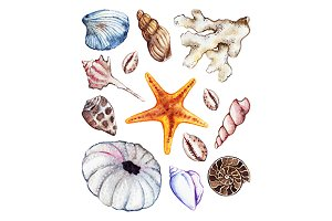 Watercolor sea ocean seashell set