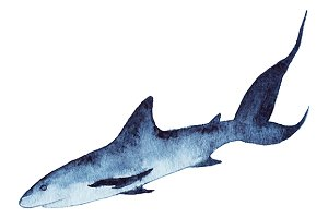 Watercolor shark animal vector