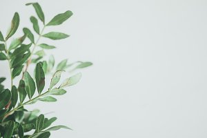 Green Leaves with White Space 2