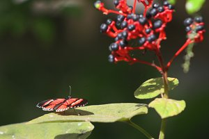 Red butterfly and red flower