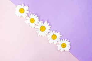 Pink & Purple Daisies Flat Lay