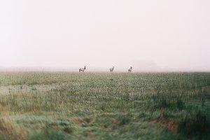 Wild life in Washington state