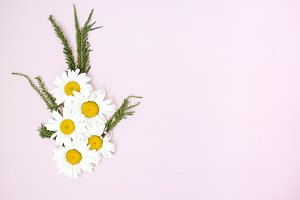 Daisies in pink background stock