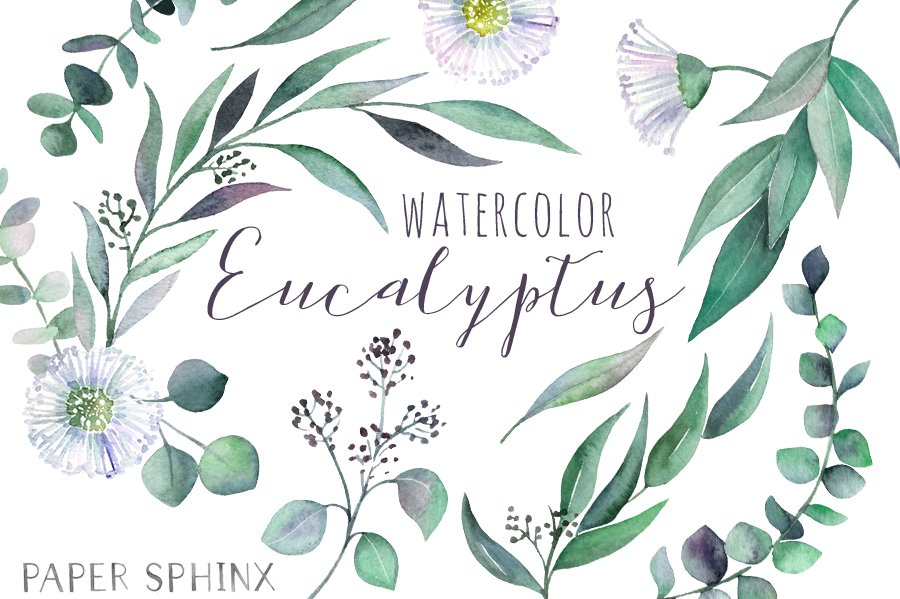 watercolor eucalyptus leaf pack illustrations creative market