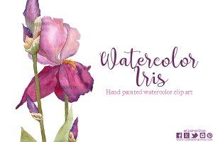 Watercolor iris clip art