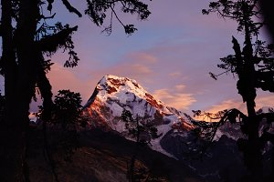 Hiking, mountaineering and climbing concept. Outdoor shot of spectacular snowy summit of Mount Annapurna South taken from behind trees in valley. Beautiful landscape of frosty sky with pink tint