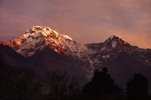Gorgeous mountains of the Annapurna mountain range standing high in background with white craggy peaks lit with pink morning sunlight and covered with snow and ice. Famous alpine destination