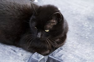 Black cat on the street