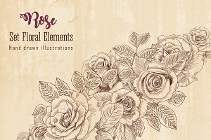 Rose flowers. Set Floral Elements.