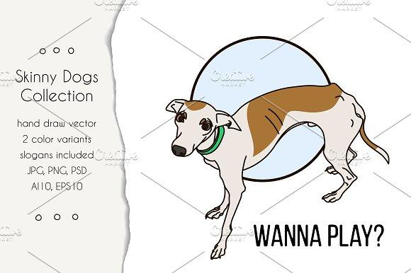 Skinny Italian Greyhound