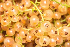 White currant fuits