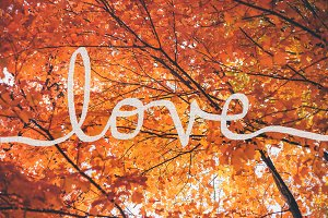 Love Overlay Script on Fall Leaves