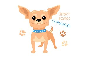 Vector funny shorthaired Chihuahua dog sitting